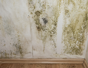 Mould Removal Specialists
